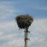 Голова цапли выглядывающая из гнезда и хитрый воробей.