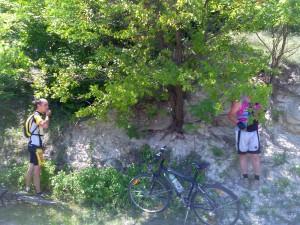 Велосипедисты в атаке!