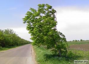Порывистый северный ветер гнул деревья