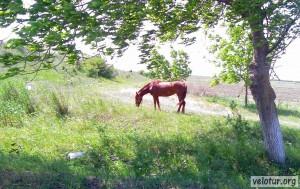 Конь, но не железный, пасётся на полянке