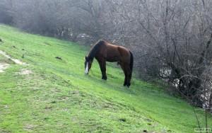 Живой конь, не железный.