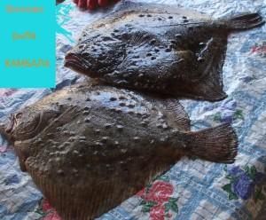 Вилково, рыба Камбала