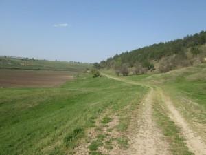 Исчезающая в поле грунтовка