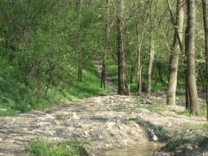 Тропинка вдоль ручейка