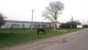 Конь пасущийся у памятника в селе Глиное