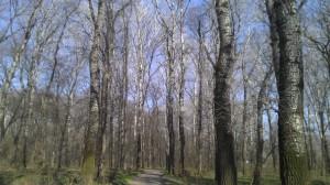 Въезжаем в Меренештский лес