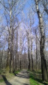 Дорога в Меренештском лесу