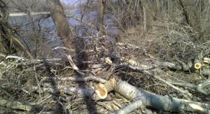 После лесоповала осталась кучи веток