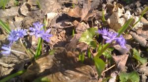 Везде было усеяно сине-фиолетовыми цветочками