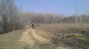 Лесоповал в Меренештском лесу