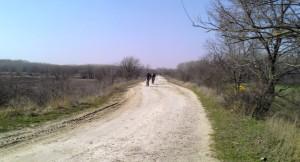 Дорога в Кицканский лес