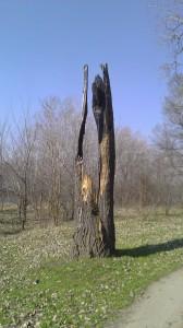 Сгоревшее дерево