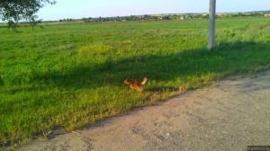 Собака без документов на границе с Украиной