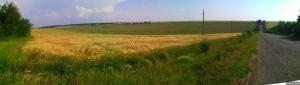 Панорама с полями